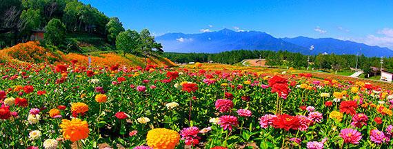 八ヶ岳散策コース