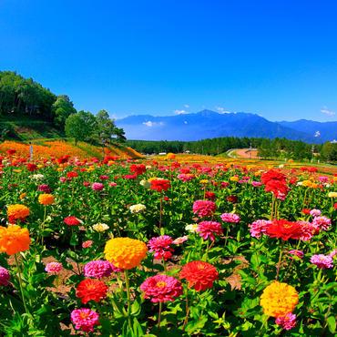標高1250mにある天空の花園 <br>富士見高原 花の里
