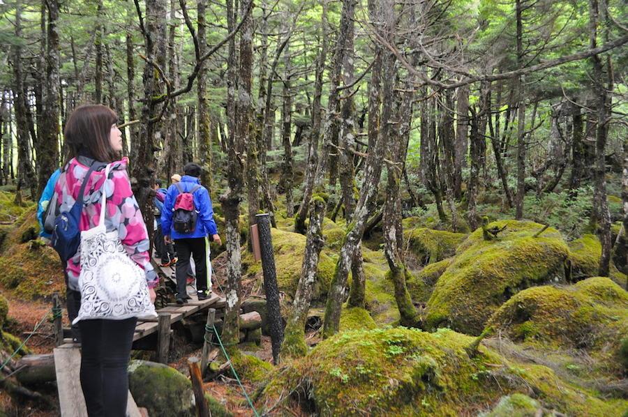 苔の精が住める場所 <BR>「苔の森 白駒の池」